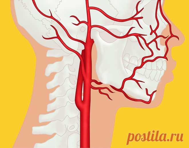 Профессор Огулов: Почему возникают инсульт, инфаркт, варикоз, гипертония и гипотония - Жизнь планеты Мышечное напряжение на шее, в грудном, в поясничном отделах негативно отражается наздоровьевсего организма. Спазм сдавливает фиброзные кольца позвонков и нервные волокна, идущие из позвоночника. Из-за этого давления передавливается оболочка нерва. …