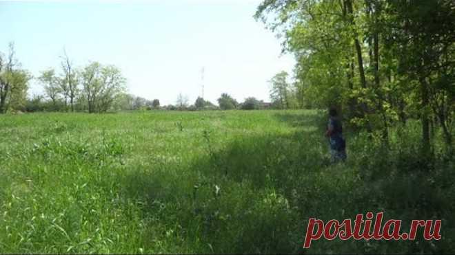 Лечебные травы - тысячелистник и полынь горькая