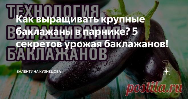 Как выращивать крупные баклажаны в парнике? 5 секретов урожая баклажанов!