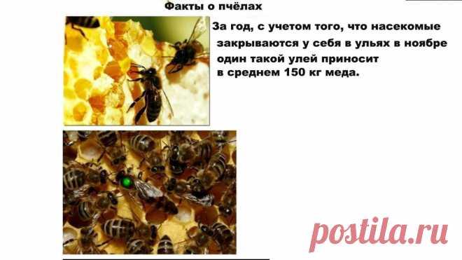 Так ли полезен мёд