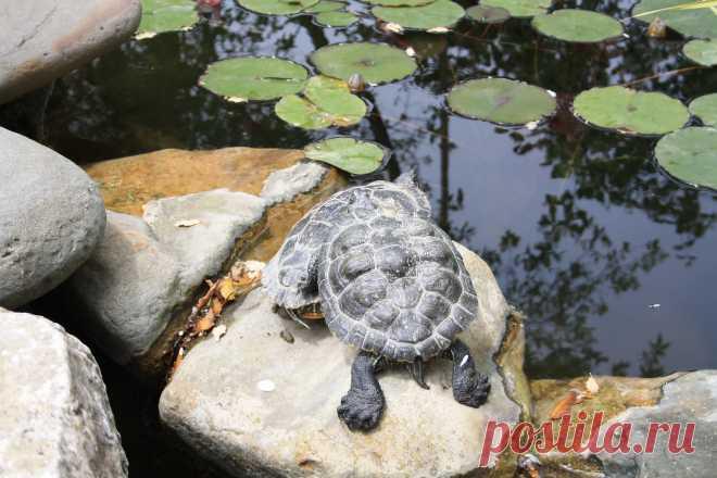 """Черепахи """"Никитский Ботанический сад"""""""