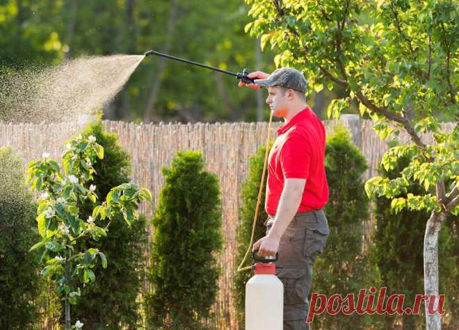 Обрабатываем сад от вредителей в весенне-летний период С приходом весны, когда природа оживает, растения нуждаются в особом уходе. Для того чтобы собрать хороший урожай плодовых и ягодных культур, необходимо в течение всего весенне-летнего периода проводить обработку кустов и деревьев на участке. Так вам удастся уберечь растения от поражения различными болезнями и повреждения... Читай дальше на сайте. Жми подробнее ➡