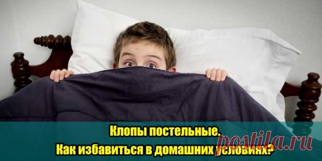 Клопы постельные. Как избавиться в домашних условиях? | Полезные советы