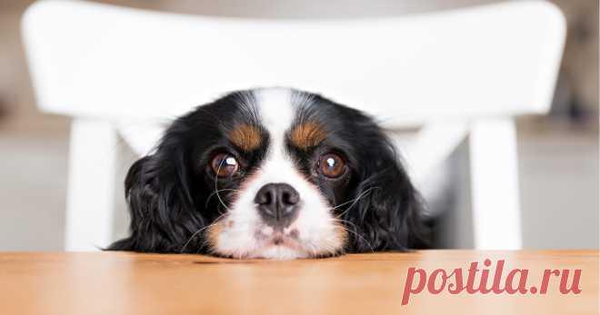 Aprenda agora algumas dicas de como dar remédios para cachorro de forma certa, assim você irá garantir a saúde e qualidade de vida dele.