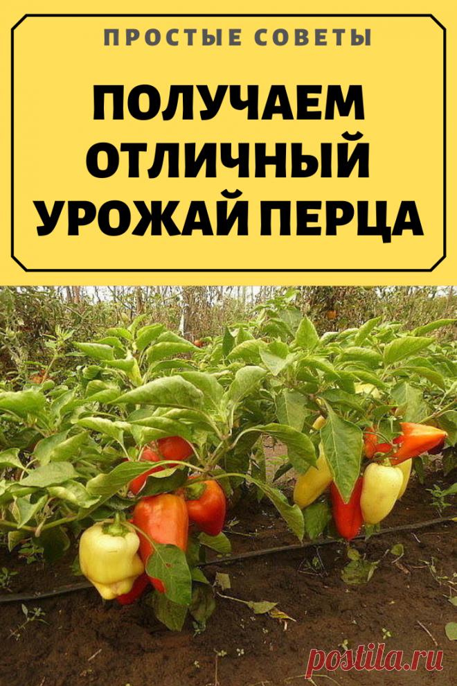 Юморная картинка о работе на огороде стояка