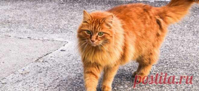 Почему моя кошка... Не приходит, когда я зову её?   PetTips