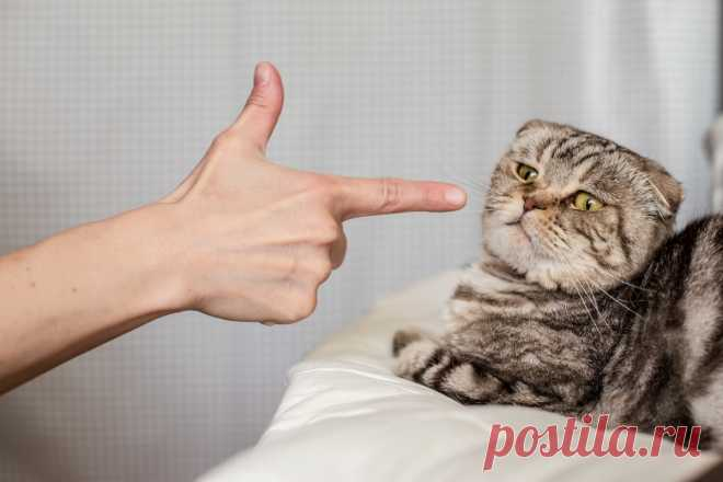 Способы наказать кота, которые он поймет Как правильно наказать кошку за плохое поведение, чтобы он понял.