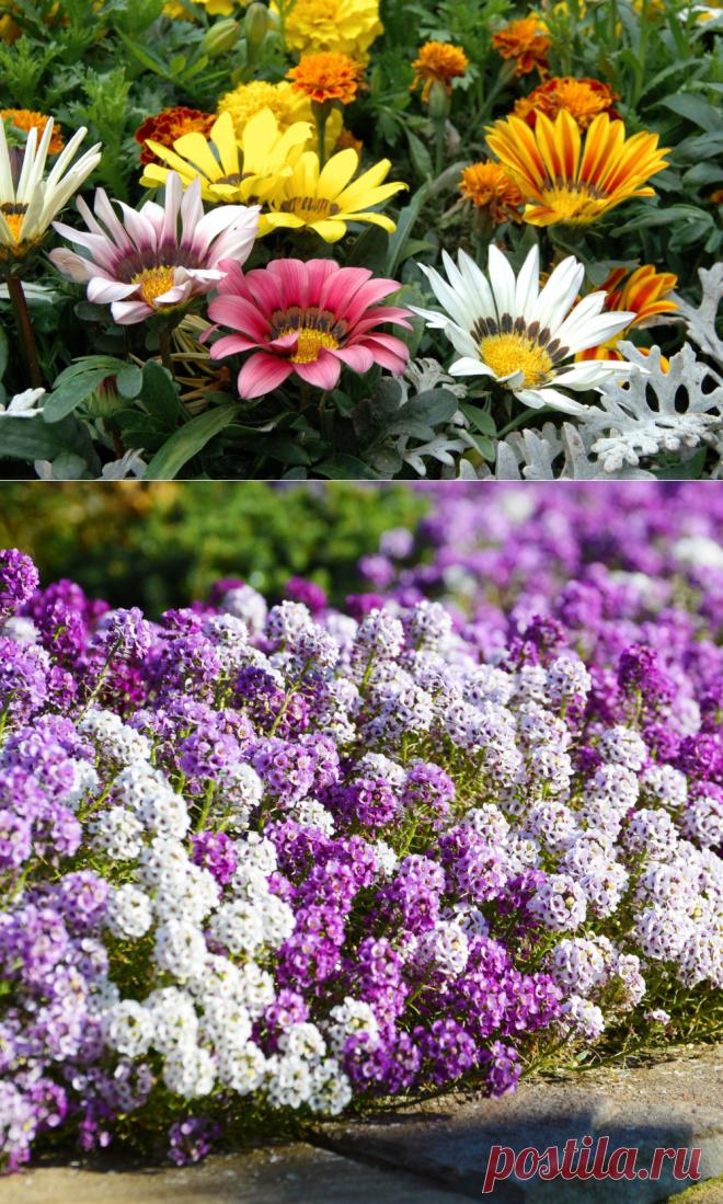 Как украсить сад: 8 красивых многолетников для дачи — Roomble.com