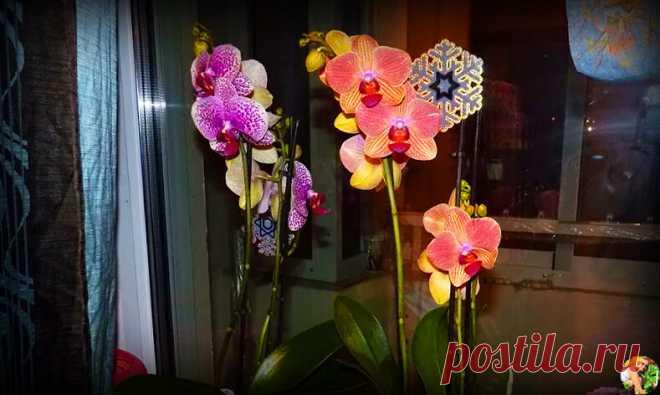 Увидела как соседка ухаживает за орхидеями, теперь поняла почему у неё всегда вырастают красивые и шикарные цветы.Делюсь методом | Огородница из Тулы I Евгения | Яндекс Дзен