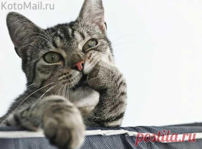 О чём думает этот котик?