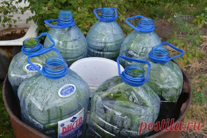 Посадка огурцов в 5 литровых бутылках