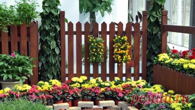 Что лучше посадить вдоль забора на участке? Что обычно сажают вдоль забора на даче? Выбираем растения под тип забора. Что можно посадить со стороны улицы?