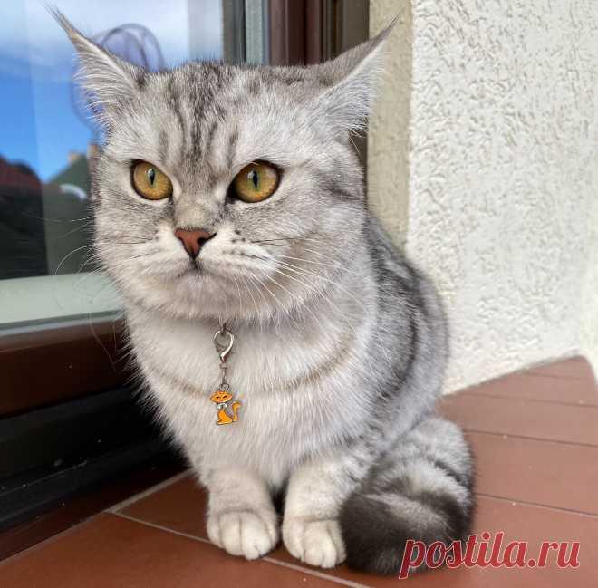 Кошка не дает покоя? Рассказываем, как научить кошку играть самостоятельно   Догги Академия   Яндекс Дзен