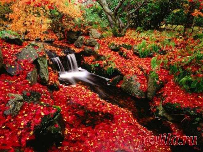 Новые фотографии природа осень.