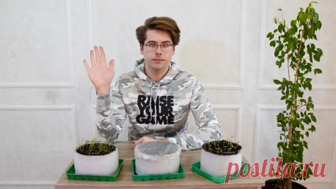 Рассада в улитке: как правильно сделать и посадить. Видео — Ботаничка.ru