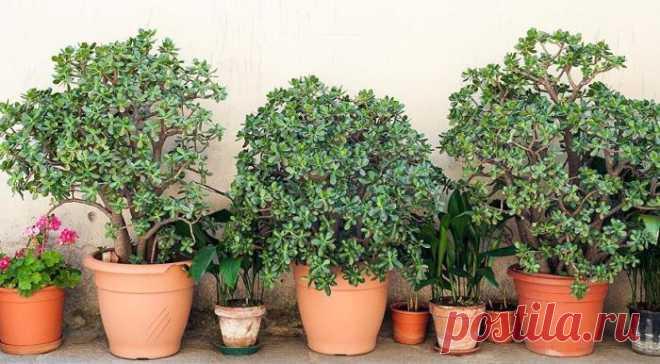 12 стойких комнатных растений для тех, кто забывает их поливать