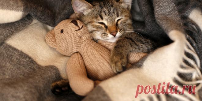 Почему моя кошка... Спит на мне? | PetTips