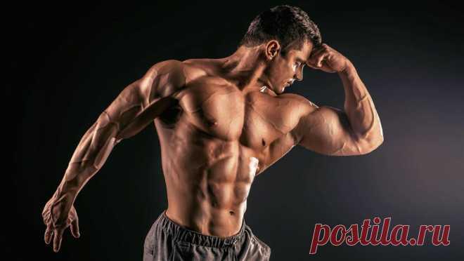 Сколько белка в мышцах и сколько они усваивают?
