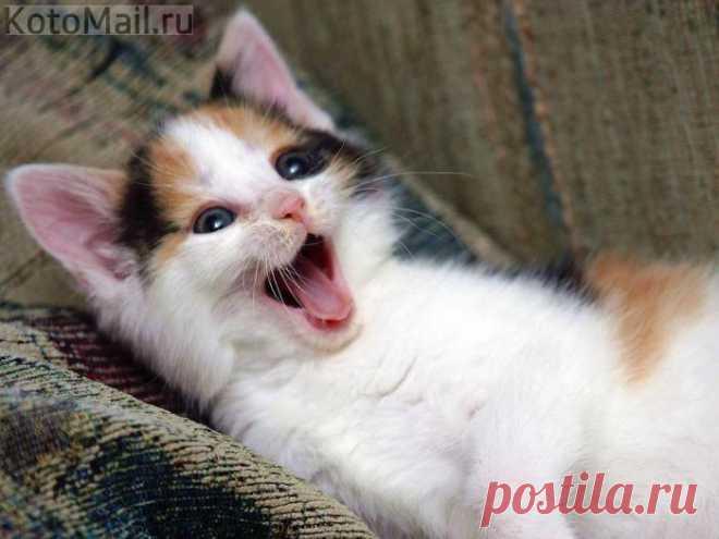 Бывает кот без улыбки, а вот улыбка без кота...