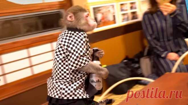 Рестораны с обезьянами-официантами. Какие еще оригинальные рестораны можно найти на нашей планете | Папа на отдыхе | Яндекс Дзен
