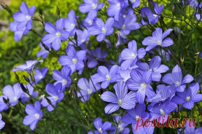 Волшебные семена для здоровья, молодости и красоты!