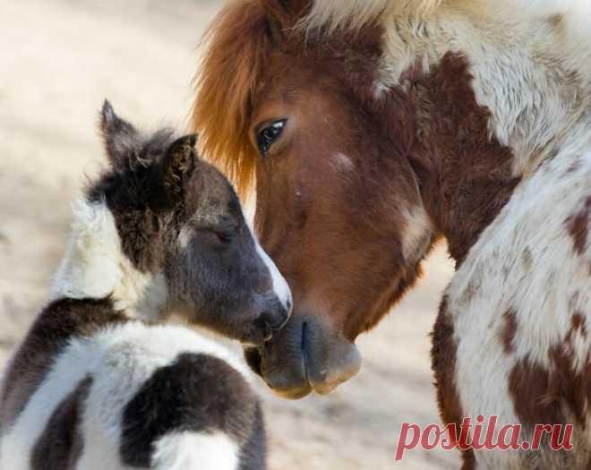 Животные тоже любят: милейшая фотоподборка для поднятия настроения | PhotoWebExpo | Яндекс Дзен