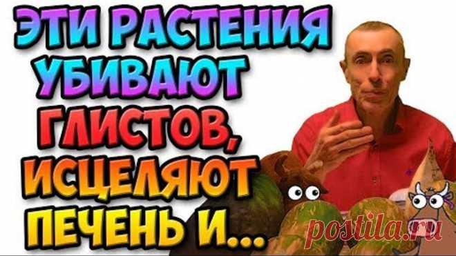 ЧЕЛОВЕК ПЕРЕСТАЕТ ГНИТЬ ЗАЖИВО! И ВОТ ПОЧЕМУ... Виталий Островский! Глисты, паразиты в человеке.