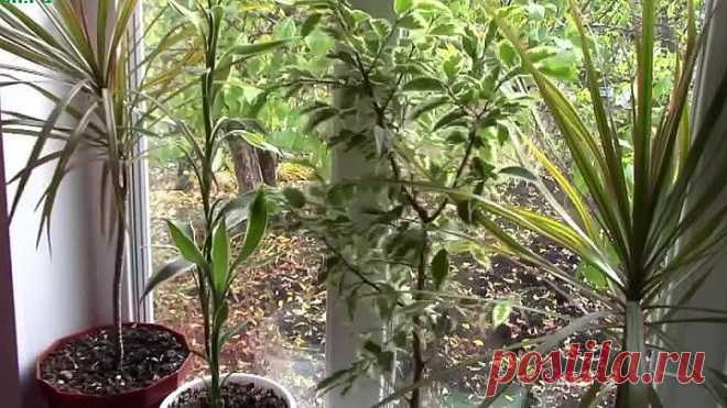 Общие принципы ухода за комнатными растениями осенью и зимой!
