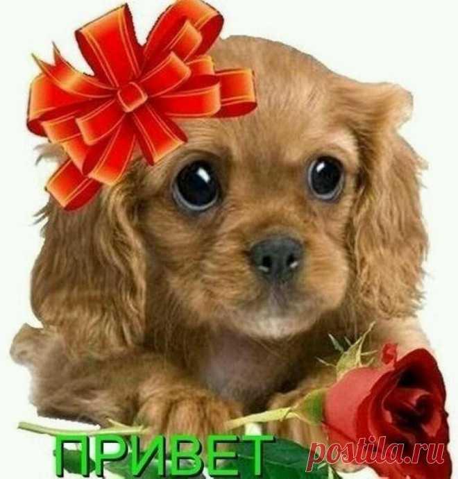 Фото собаки с надписью привет