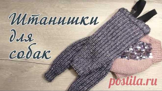 Как связать штанишки для собак, вязание спицами