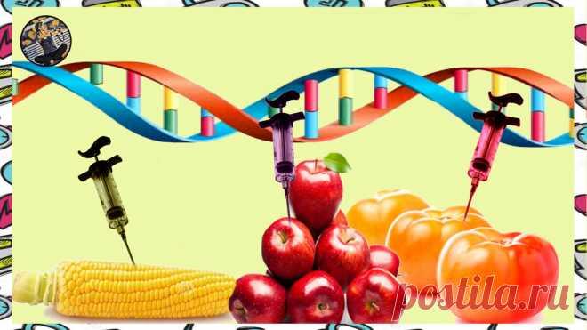 ГМО- несколько причин не бояться этих букв, а быть благодарным ученым за разработки | Записки немолодого ЗОЖника | Яндекс Дзен