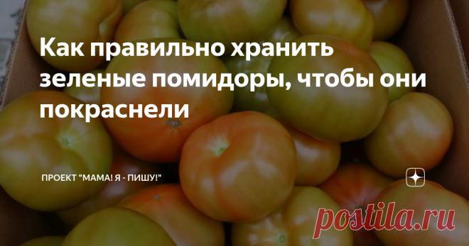 Как правильно хранить зеленые помидоры, чтобы они покраснели