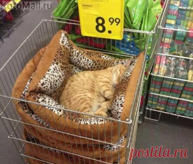 Кот в комплекте