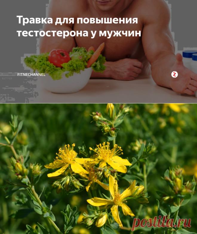 Травка для повышения тестостерона у мужчин | fitnechannel | Яндекс Дзен