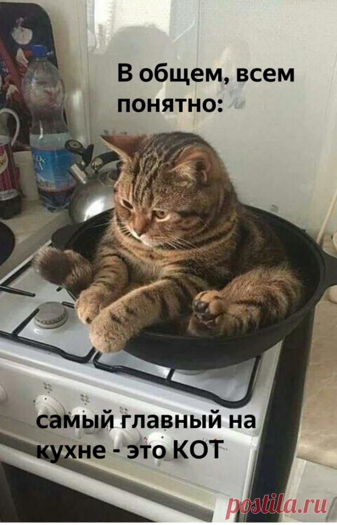 😸Кот на кухне: весёлая фотоподборка | Нос, хвост, лапы | Яндекс Дзен