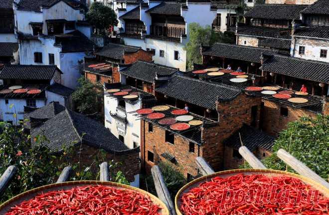 Жители Шанжао (провинция Цзянси, Китай) сушат красный перец чили, кукурузу, тыкву и другие плоды на деревянных подносах всего за один день, чтобы отметить Лицю, 13-й по счету сезон китайского лунного календаря, который обозначает начало осени. В Китае осень рассматривается как благодатное время года. Она не только избавляет от летнего зноя и докучливых насекомых, но и дарит урожай. Согласно поверьям, если в этот день грохочет гром и идут проливные дожди, то осенью будет плохой урожай, а если…