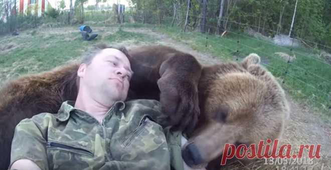 Медвежонка приютили на аэродроме, он вырос и дружит с людьми #Видео