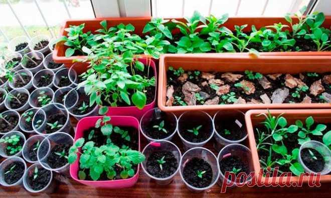 Выращивание и посев рассады цветов в домашних условиях