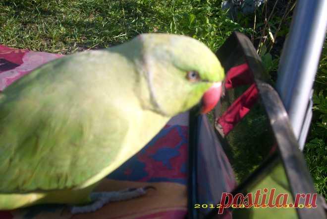 Это наш Жора.говорящий попугай.