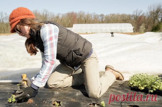 5 вещей, которые вы делаете в огороде зря   Советы по дому