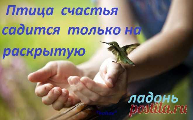 Птица счастья садится только на раскрытую ладонь