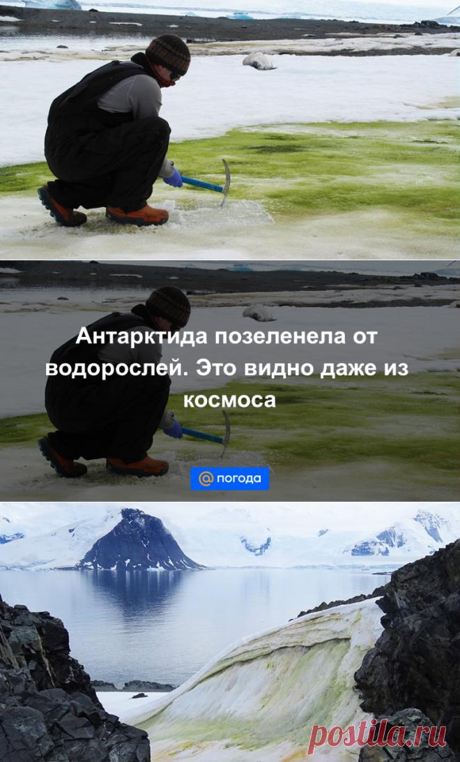 Антарктида позеленела от водорослей. Это видно даже из космоса - Погода Mail.ru