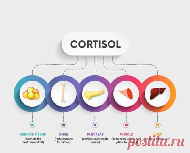Что мы знаем о кортизоле / Будьте здоровы