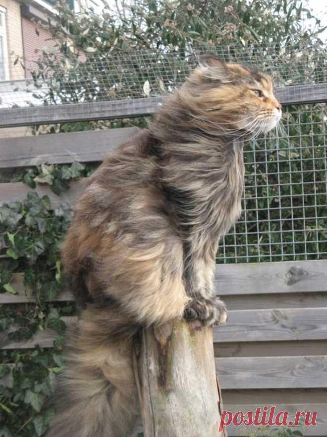Коротко о погоде картинки прикольные ветер
