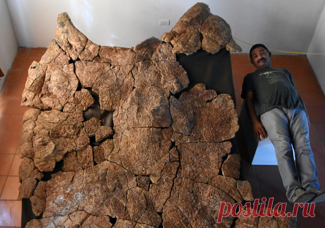 Палеонтологи нашли останки самой большой черепахи, которая обитала на Земле около 10 млн лет назад