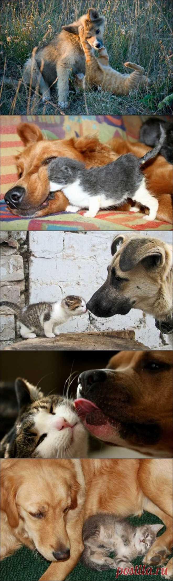 Милые котики и собачки / Питомцы
