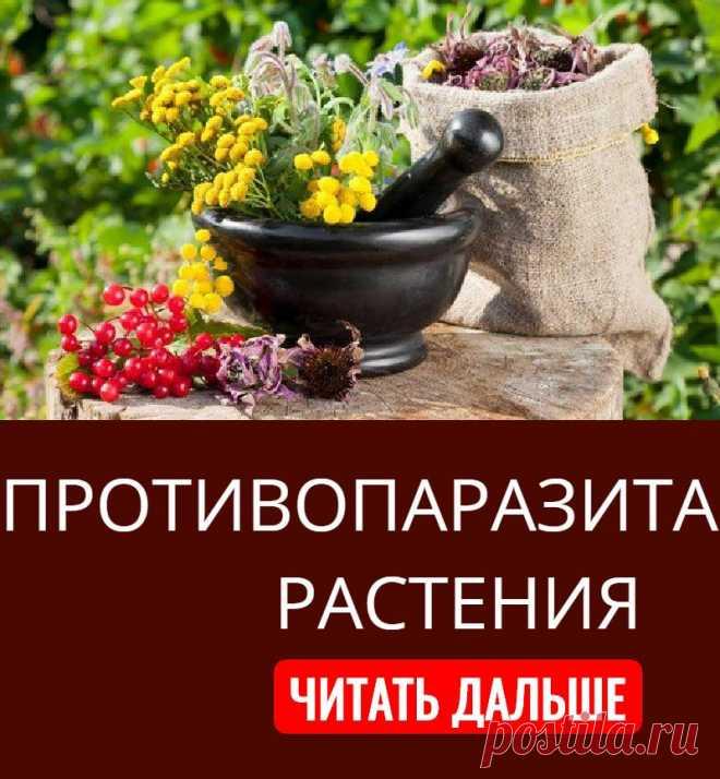 ANTIPARASITIC PLANTS