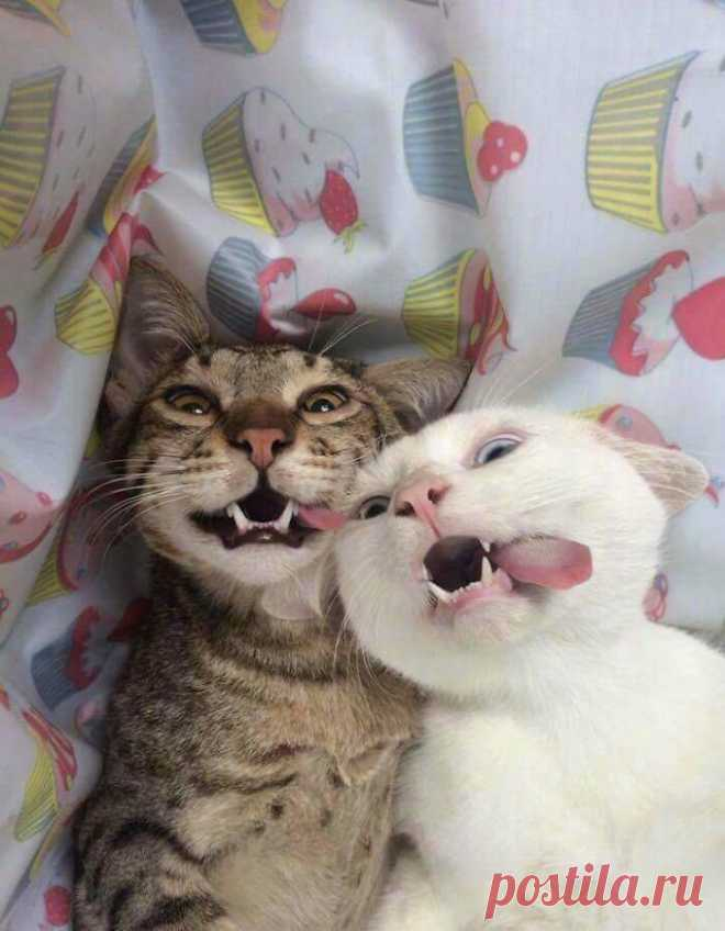 18 милых фотографий кошек, доказывающих, что один питомец хорошо, а два лучше