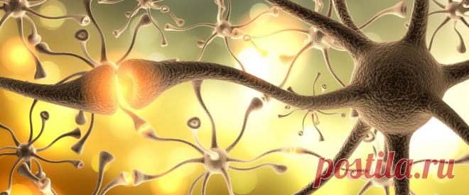 Дофаминовое голодание. Что это и к чему приводит? Прежде чем переходить к голоданию, нужно более подробно выяснить, что из себя представляет дофамин и откуда он появляется. Дофамин — это так называемый гормон удовлетворения или вознаграждения.