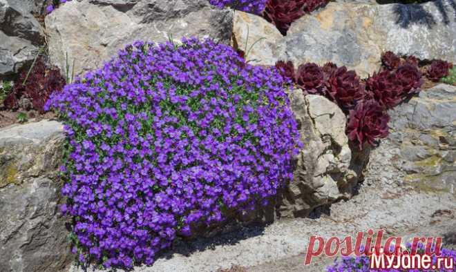 Правила ухода за альпийской горкой - альпийская горка, уход за альпийской горкой, альпинарий, растения для альпинария, что посадить на ал
